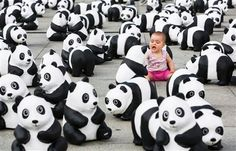 Nine month old Johanna sits between 1,600 panda figures from papier mache in front of the main station in Berlin, Germany, Monday, Aug. 5, 2013. The World Wide Fund for Nature (WWF) has put 1,600 panda bears in front of the train station for two days to symbolize how few of the animals are still alive in the wild. It is the start of a tour of 25 German cities to celebrate the 50th anniversary of the WWF.