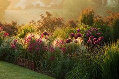 Pettifers, oxfordshire: Dawn light hits a border with allium firmament, stipa tenuissima, gladiolus communis byzantinus