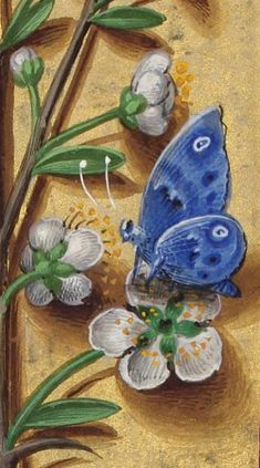 Horae ad usum Romanum, dites Grandes Heures d'Anne de Bretagne Author : Bourdichon, Jean (1457 ?-1521). Illuminated Letters, Illuminated Manuscript, Impressions Botaniques, Calligraphy Drawing, Book Of Hours, Floral Border, Medieval Art, French Art, Botanical Prints