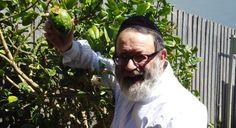 A bumper etrog crop - The Australian Jewish News