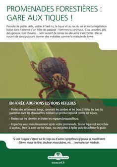 maladie de Lyme (tique, borréliose, France, 2016)