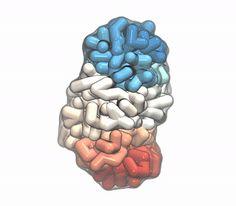 DNA in 'unbiased' model curls both ways