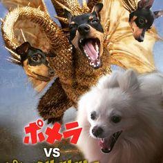 #動物#愛犬#ペット#ポメラニアン #ミニチュアピンシャー#合成#コラージュ #映画#怪獣#特撮#ヒーロー#ゴジラ #キングギドラ#パロディ#ポスター