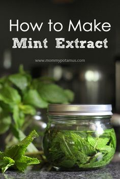 Mint Extract Recipe - Ohhh, I'm going to add a minty twist to my favorite brownies, chocolate pudding, ice cream, hot chocolate or tea! Level Up your favorite brownies AND save your family money with this two-ingredient mint extract recipe. Herbal Remedies, Natural Remedies, Do It Yourself Food, Mint Extract, Chocolate Pudding, Hot Chocolate, Chocolate Extract, Chocolate Mint Plant, Canning Recipes