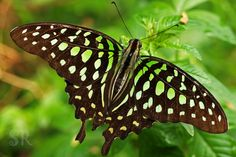 the green spotted triangle by Syahrul Ramadan on 500px