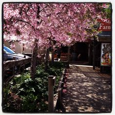 Spring blossoms @ matakana indie markets House Landscape, Spring Blossom, Blossoms, Indie, Landscaping, Sidewalk, Marketing, Flowers, Side Walkway