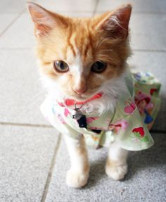 Cat in a Strawberry Shortcake dress.