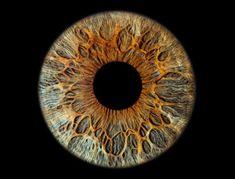 Microscopic Photography, Macro Photography, Eye Texture, Digital Art Beginner, Profile Drawing, Eyes Artwork, Face Anatomy, Aesthetic Eyes, Medical Art