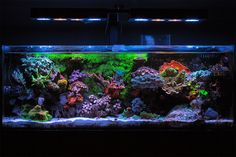 Polarcollision Congratulations to community member Polarcollision and her 24 gallon reef aquarium for being selected for our May Reef Profile! This nano reef aquarium is absolutely jam packed with beautiful mature specimens, all coexisting...