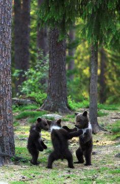 Dancing little bears