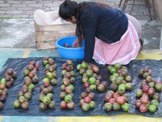 A sweet market in Olinala, Mexico