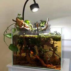 Aquarium Garden, Mini Aquarium, Betta Aquarium, Home Aquarium, Tropical Aquarium, Aquarium Design, Planted Aquarium, Betta Fish, Planted Betta Tank
