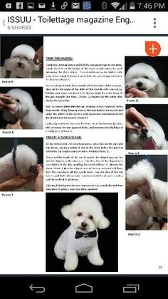 Poodle grooming - Best Dog Clippers For Dog Grooming 2018 – Poodle grooming Dog Grooming Styles, Dog Grooming Clippers, Dog Grooming Shop, Poodle Grooming, Grooming Salon, Puppy Care, Dog Care, Pet Style, Best Dogs