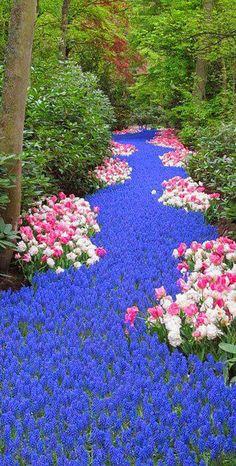 Keukenhof Gardens - Amsterdam | Netherlands