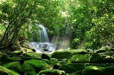 The Panamanian Jungle...again :)