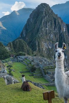 """Discovery """"Greetings from Machu Picchu! The ancient Incas domesticated llamas to provide wool, meat, and dashing good looks."""" 📸 + text by Derek Herndon Places To Travel, Places To See, Travel Destinations, Peru Travel, Tier Fotos, South America Travel, Travel Aesthetic, Wonders Of The World, Travel Photography"""