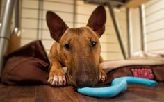Maybe you want to play? by lostINmia, via Flickr
