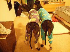 Greyhound Pajamas---Hot Off The Press....er, Sewing Machine - Page ...
