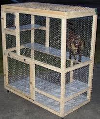 chicken wire cat pen - Google Search