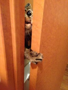 I'm Not Snooping. I Couldn't Hear Through The Door.