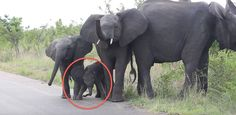 Tourists watch in amusement as a baby elephant in South Africa tries to figure out what to do with the long object dangling from its face.
