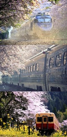 ride an express through the cherry blossoms in Japan...just like 5 Centimeters Per Second :D