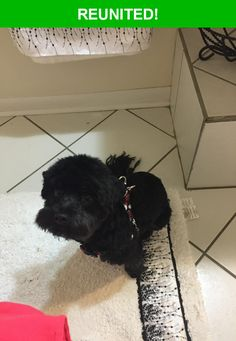 Great news! Happy to report that Onyx has been reunited and is now home safe and sound! :)