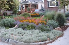 Becker water wise front yard landscaping.