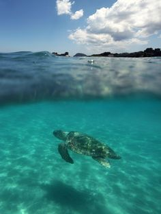 https://flic.kr/p/wyTqSc   Two Different Worlds   Caretta caretta captured just outside of our hotel in Laganas, Zakynthos.
