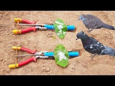 Best DIY Bird Trap Using Pliers With Pipe - How To Use Pliers To Trap Birds - YouTube