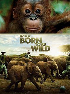 """""""Born to Be Wild"""" IMAX Movie - Girl Scout Junior Animal Habitats Badge - Check out the DVD from your local library, Netflix, etc. - Great for learning about endangered orangutans and elephants. - Use as a learning resource or let the girls enjoy it at their wildlife awareness party (Step 5). - This heartwarming film documents orphaned orangutans and elephants and the extraordinary people who rescue and raise them-saving endangered species one life at a time."""