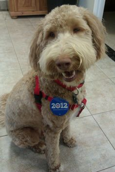 Brody from FL is IN for 2012! #Obama2012