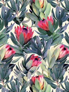 Painted Protea Floral by micklyn - Blue, rose, and cream floral pattern on fabric, wallpaper, and gift wrap. Beautiful bold florals perfect for throw pillows or kitchen wallpaper. Wall Patterns, Print Patterns, Floral Retro, Art Bleu, Blue Art, Oeuvre D'art, Pattern Art, Pattern Fabric, Green Pattern