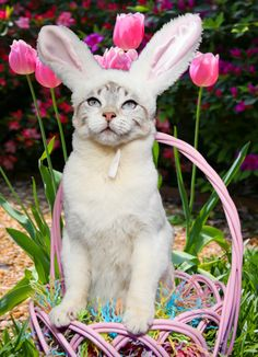 Easter Lily Poisoning in Cats: This time of the year makes all veterinarians and veterinary technicians cringe… Why? As Easter approaches, there are Easter lilies abounding everywhere. (Check out the order form for these poisonous plants from a bulletin below – yikes!)