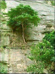 Entre las rocas Silvia Aragona