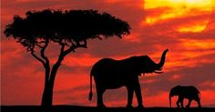 wild life mother and baby elephant silhouetted at sunrise kenya prints posters African Elephant, African Safari, African Art, Elephant Afrique, Image Elephant, Baby Elephant, Silhouette Fotografie, Elephant Wallpaper, The Animals
