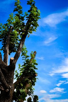 Beautiful sky and tree. Photography