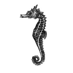 seahorse, Rotring Rapidograph auf 250 g/qm Bristol Drawing Board, A4