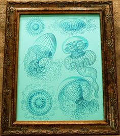 Jellyfish in Blue from 1904 Art Print $7.50