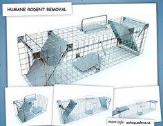 Animal cages for removing uninvited guests Sale and rental Pet Cage, Washing Machine, Home Appliances, Animal, Electrical Appliances, Domestic Appliances, Washer, Appliances, Animals