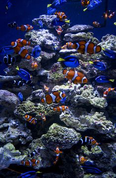 Clowns & Tangs