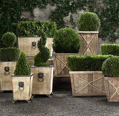 Boxwood topiaries in wood planters for the rooftop or front door