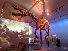 Suchomimus — Royal Ontario Museum