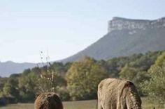 gite avec ânes,ballades à dos d'ânes Mas des Violettes