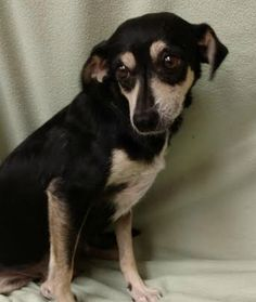 Maya is a 3-year-old, 18-pound, female terrier mix. She gets along well with other dogs and loves kids. Her adoption fee helps cover spay/neuter, vaccinations, microchip, vetting, food and care. Call Pets Without Partners at 243-6911. Go to www.petswithoutpartners.org. Go to www.havenhumane.net. Go to www.redding.com for more adoptable pets.