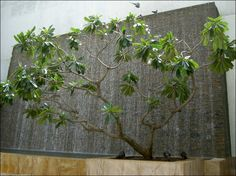 water wall features for patios | Wall Fountain Creates A Interesting Back Drop To Show Off Garden ...