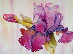 Maddens Amarillas Painting  - Maddens Amarillas Fine Art Print