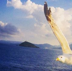 You had me caged up like a bird in mid-summe. You saw me waiting I was crazy on fire waiting to fly I Can Fly #photooftheday#webstagram#wanderlust#scenery#landscape#liveauthentic#three#20likes#canon#weather#pordosol#getoutside#love#wonderful_places#تصويري#صباح_الخبر#island#cactus#beautifuldestinations#beauty#like4like#exklusive_shot#istanbul#streetart#streetphotography#carpediem_sga#lovethis#blueinmyframe#streetstyle#isoladelba