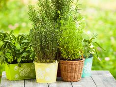 Easy Guide to Herb Garden Designs Best Of How to Grow Culinary Herbs In the Home Herb Garden An Easy Guide Best Starters, Energie Positive, Herb Garden Design, Healthy Salmon Recipes, Plant Pictures, Gardening Supplies, Growing Herbs, Recipe Images, Medicinal Herbs