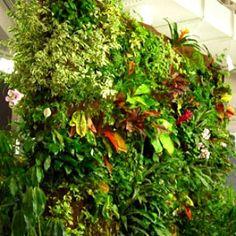 Vertical Gardening & 'Living Walls'   Vermont Wildflower Farm